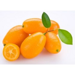 Kumquat Ecológico, el Kg (Andalucía)