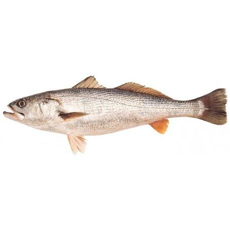 Pescadilla Nacional, Pieza de 1,5 Kgs Aprox