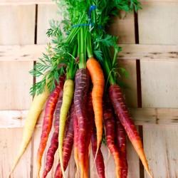 Zanahorias de Colores, el Kg (Holanda)