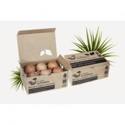 """Huevos """"XL"""" Ecológicos 1/2 Docena (La Pradera)"""